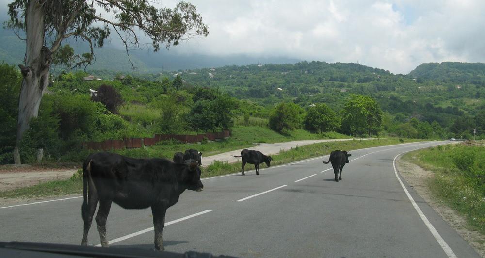 Путешествие на машине в Абхазию - правила пересечения границы