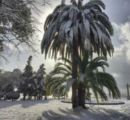 Абхазия, пальма в снегу зимой